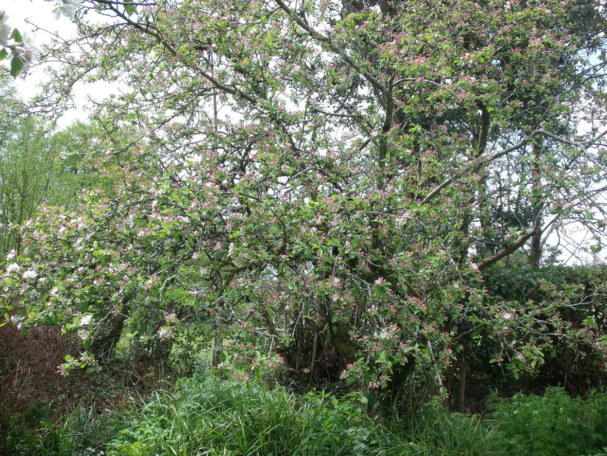 blackstairs eco trails tree blossoms