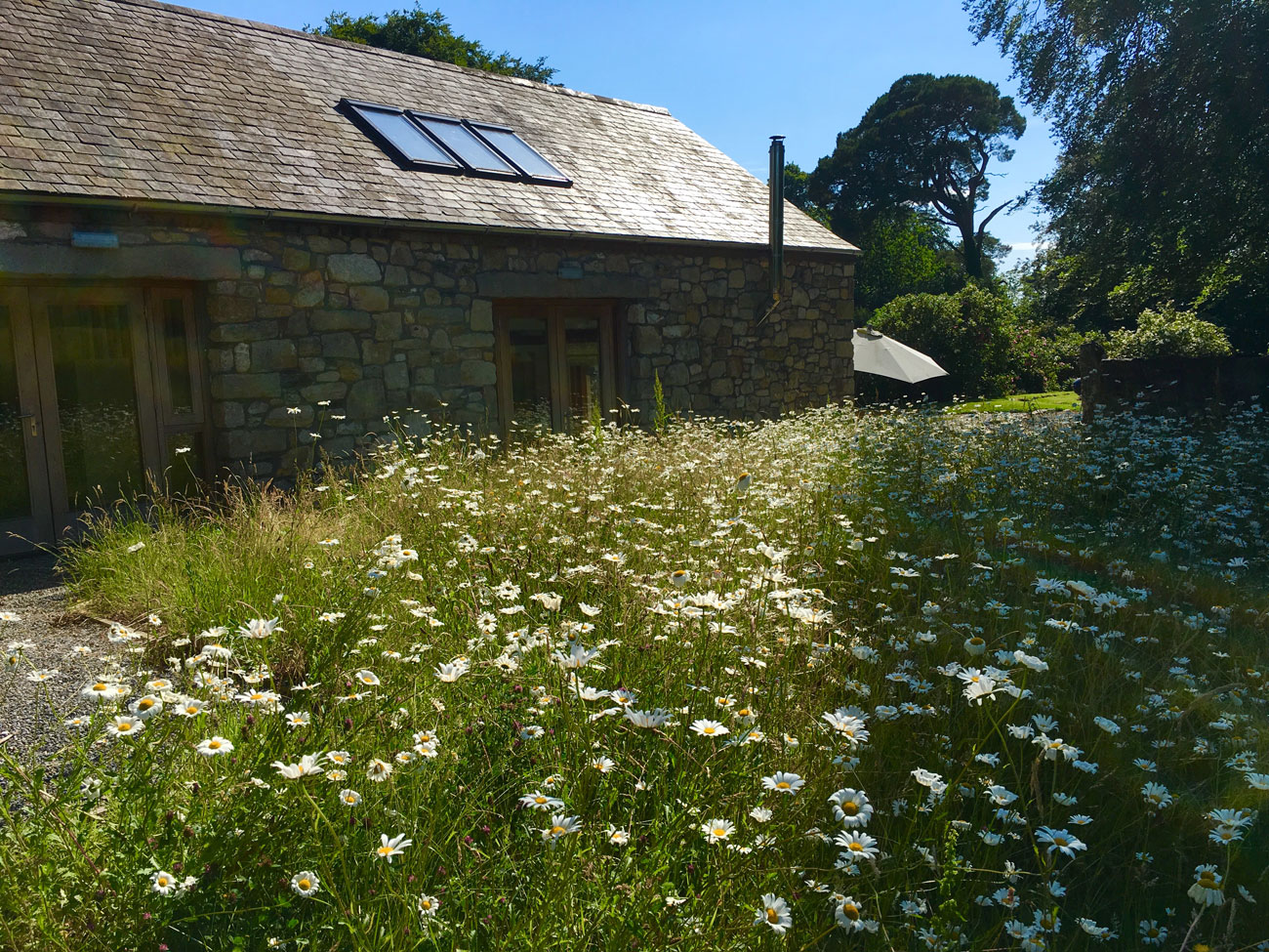 book the barn blackstairs eco trails daisy